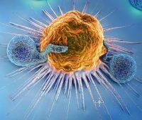 einzelne Zelle bei Entzündungsgeschehen